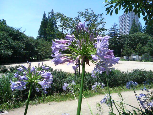 大阪は暑し